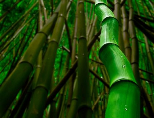 The Beauty in Bamboo